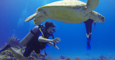 Scuba diving with turtle